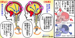 脳せきずい液の仕組み【バランス整体院エール】