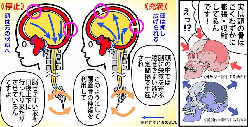 大阪堺市 バランス整体院エール 脳せきずい液(脳のリンパ液)
