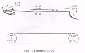 クラニオセイクラル【整体院エール】