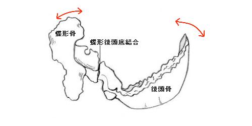 頭蓋仙骨リズムと蝶形後頭底軟骨結合
