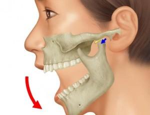 顎関節の仕組み