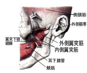 顎関節の筋肉