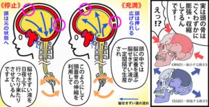 頭蓋仙骨リズム(第1次呼吸)